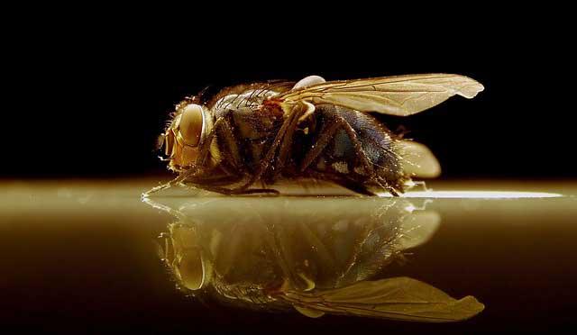 Fruchtfliegenfalle selber bauen - Hausmittel gegen die Plage
