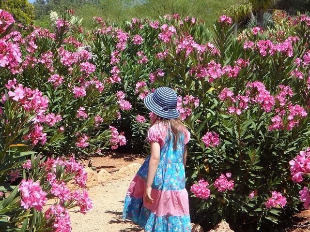 Oleander schneiden - Anleitung zur Pflege