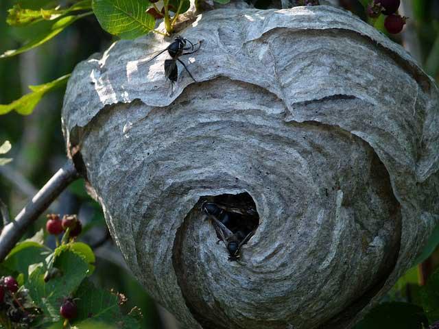 Wie Wespen vertreiben? Lösung so verblüffend einfach!