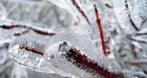 Winterschutzvlies - Pflanzen wirksam vor Frost schützen